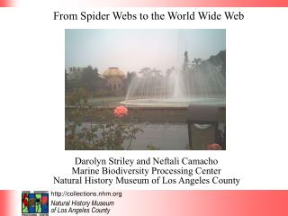 From Spider Webs to the World Wide Web