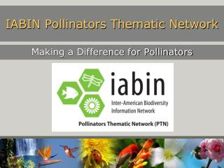IABIN Pollinators Thematic Network