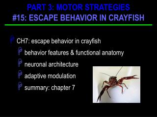 CH7: escape behavior in crayfish  behavior features & functional anatomy  neuronal architecture