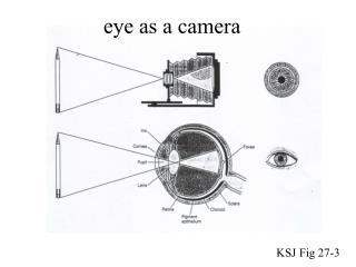 eye as a camera