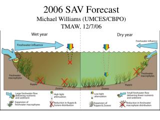 2006 SAV Forecast Michael Williams (UMCES/CBPO)  TMAW, 12/7/06