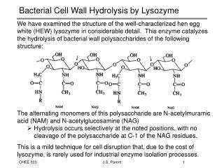 Bacterial Cell Wall Hydrolysis by Lysozyme