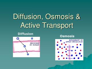 Diffusion, Osmosis & Active Transport