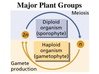 Major Plant Groups