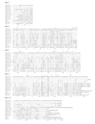 Exon 1 UBA*0301    ----------MKCFILLLLGIA-LHSSSA UBA*1001    ----------PL..........-......