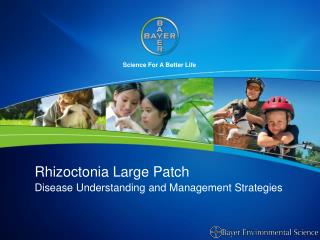 Rhizoctonia Large Patch