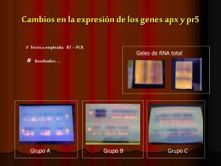 Cambios en la expresión de los genes apx y pr5
