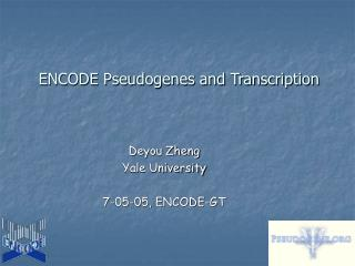 ENCODE Pseudogenes and Transcription