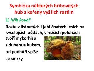 Symbióza některých hřibovitých hub skořeny vyšších rostlin