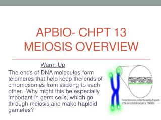 APBIO-  Chpt  13 Meiosis Overview