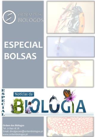 ESPECIAL BOLSAS