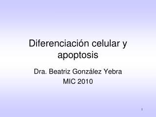 Diferenciación celular y apoptosis