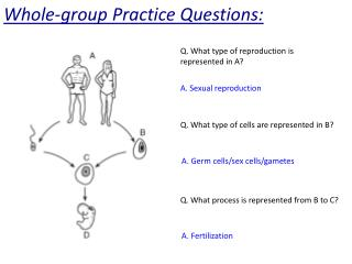 Whole-group Practice Questions: