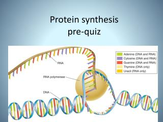 Protein synthesis  pre-quiz