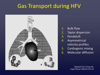 Gas Transport during HFV