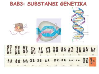 BAB3: SUBSTANSI GENETIKA