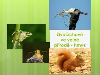 Živočichové  ve volné přírodě  - hmyz