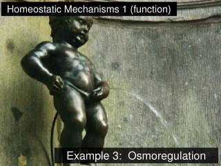 Example 3:  Osmoregulation