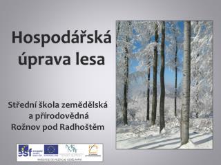 Hospodářská úprava lesa