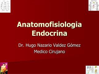 Anatomofisiologia Endocrina