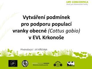 Vytváření  podmínek pro  podporu  populací vranky  obecné  ( Cottus gobio ) v EVL Krkonoše