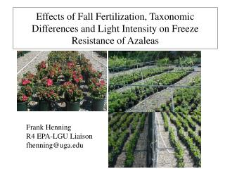 Effects of Fall Fertilization, Taxonomic Differences and Light Intensity on Freeze Resistance of Azaleas