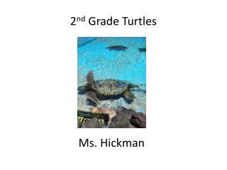 2 nd  Grade Turtles