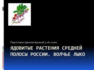 Ядовитые растения средней полосы России. Волчье лыко