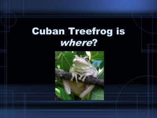 Cuban Treefrog is where