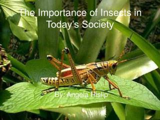 The Importance of Insects in Today s Society