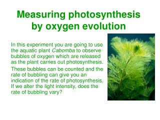 Measuring photosynthesis by oxygen evolution