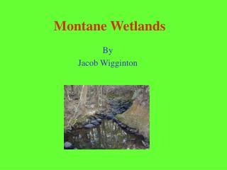 Montane Wetlands