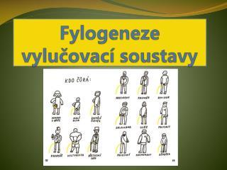 Fylogeneze  vylučovací soustavy