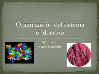 Organizaci�n del sistema endocrino