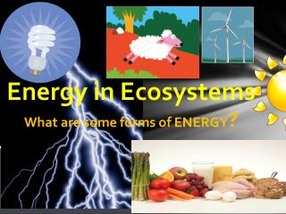Energy in Ecosystems What are some forms of ENERGY ?
