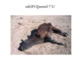 wb‡Pi QwewU †`L!