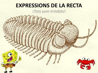 EXPRESSIONS DE LA RECTA