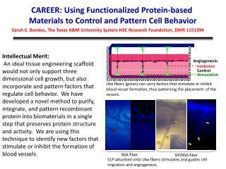 Sarah E.  Bondos , The Texas A&M University System HSC Research Foundation, DMR 1151394