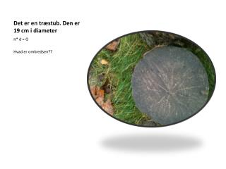 Det er en træstub. Den er 19 cm i diameter
