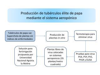 Producción de tubérculos élite de papa mediante el sistema  aeropónico