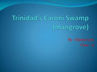 Trinidad's Caroni Swamp (mangrove)