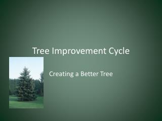 Tree Improvement Cycle