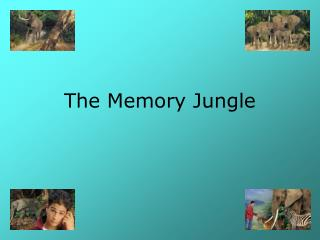 The Memory Jungle