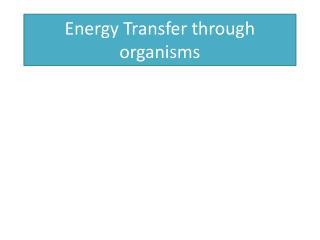 Energy Transfer through organisms