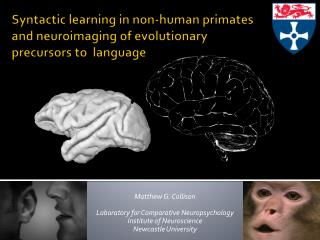 Syntactic learning in non-human primates and neuroimaging of evolutionary precursors to  language