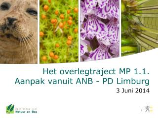 Het overlegtraject MP 1.1. Aanpak vanuit ANB - PD Limburg