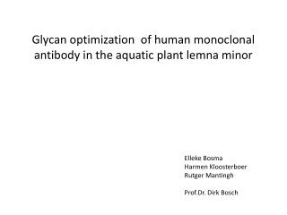Glycan optimization  of human monoclonal antibody in the aquatic plant lemna minor