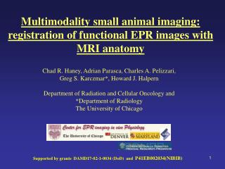 Multimodality small animal imaging: registration of functional EPR images with MRI anatomy