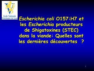 Escherichia coli  O157:H7 et les  Escherichia  producteurs de Shigatoxines (STEC)