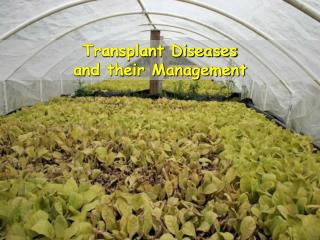 Transplant Diseases and their Management